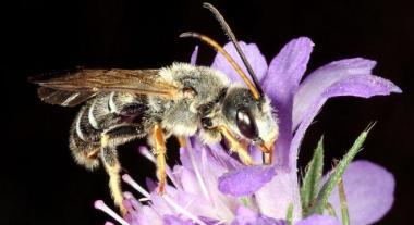 Essaim d'abeilles sauvages dans les locaux de Bruxelles Environnement